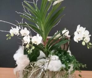 baule di orchidee bianche