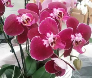 LE ORCHIDEE SPECIALI