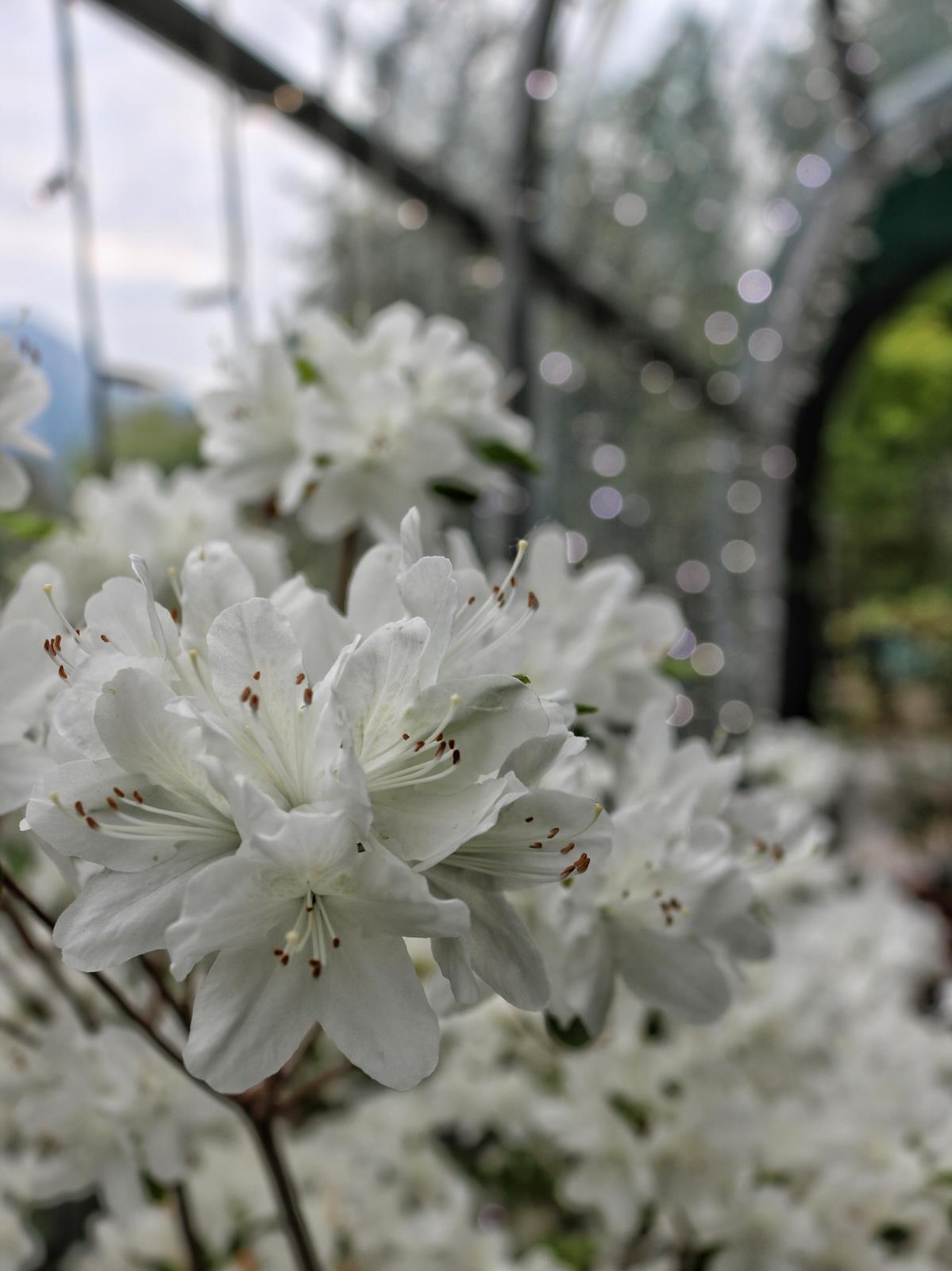 Piante per esterno vivai andriolo osoppo for Piante ornamentali per esterno