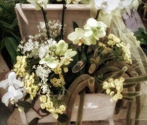 Baule di Orchidee e Cactus