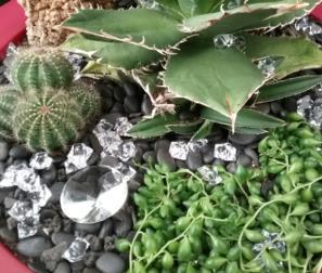 cactus 3a