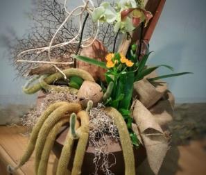 cactus e orchidee