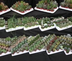 Collezione di mini cactus