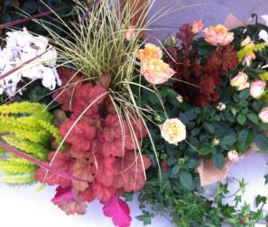 composizione di piante colorate