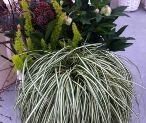 composizione di piante per ogni stagione