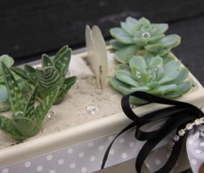 composizione cactus