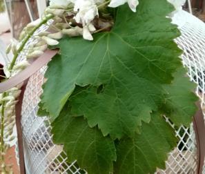 Composizione con foglie di vite