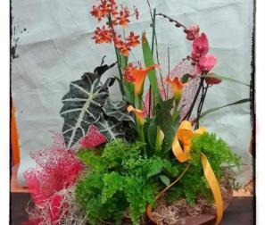 composizione con orchidee, tillandsia e piante verdi.