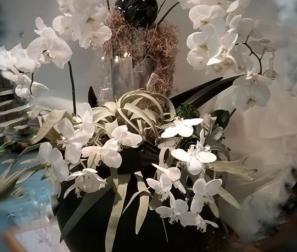 Composizione con Phalaenopsis bianche, tillandsie e platycerium.