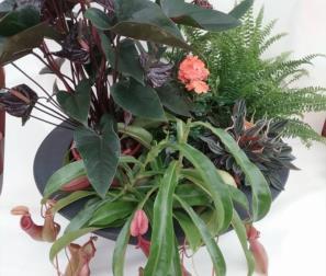 Composizione con pianta carnivora