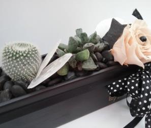 composizione di fiori e cactus