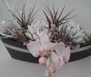 echeverie, tillandsie e orchidee