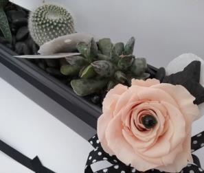 fiori e cactus