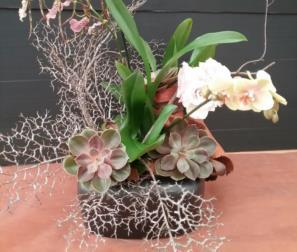 Fiori e succulente