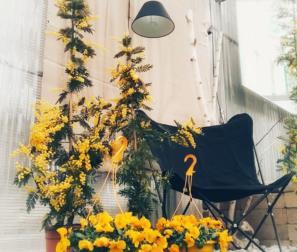 fiori gialli, mimosa e viole
