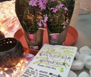 oerstedella, orchidea dal Panama