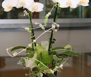 proposta di bomboniera, orchidea mini in vaso di vetro