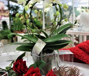 Orchidea bianca e rose rosse
