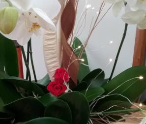 Phalaenopsis bianca, rose stabilizzate e luci