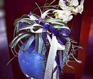 phalaenopsis e tillandsie