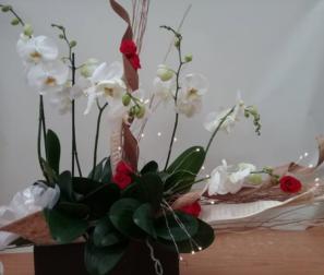 Phalenopsis, rose stabilizzate e luci