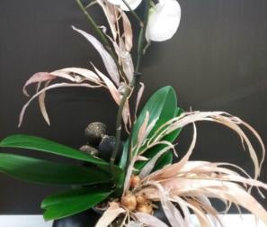 Orchidea bianca con foglie di Eucalyptus
