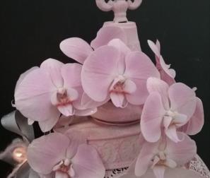 Splendido colore di Phalaenopsis