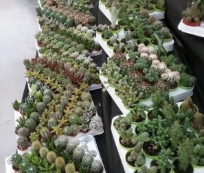 Tante miniature di cactus